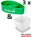 AvoSeedo Set 3 Pack Grow your own Avocado Tree!