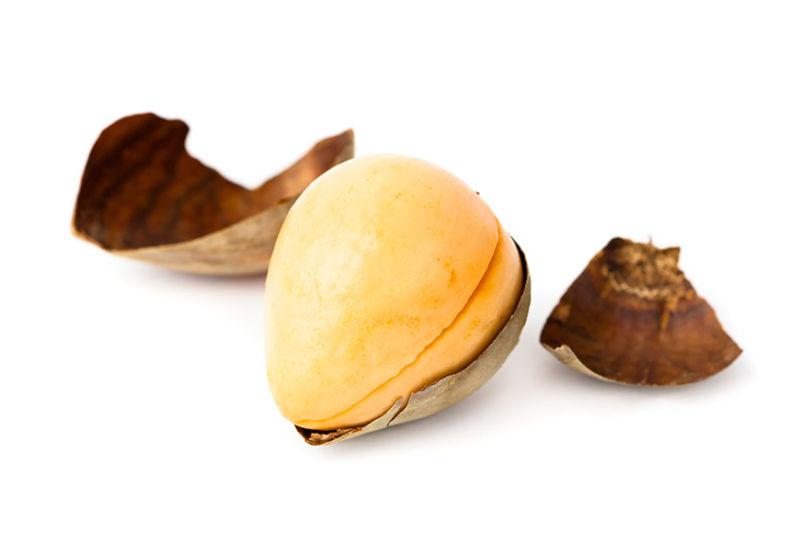 Avocado seed