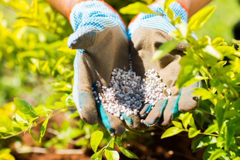 Avocado fertilizer